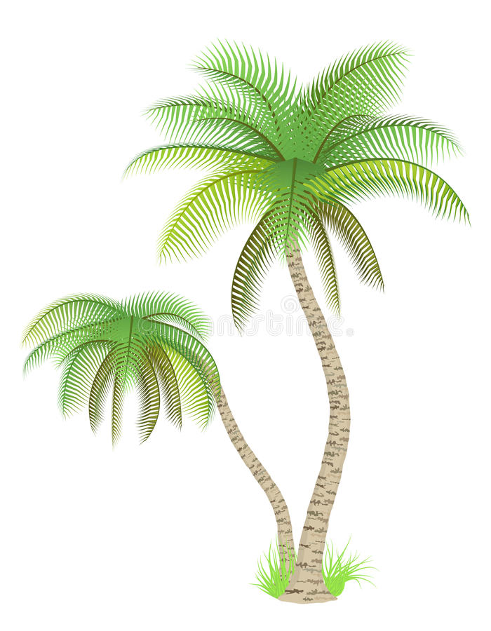 Palm trees. Vector illustration of palm trees over white royalty free illustration