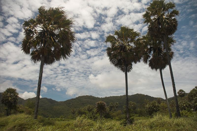 Download Palm trees stock photo. Image of green, holiday, tropical - 12484526