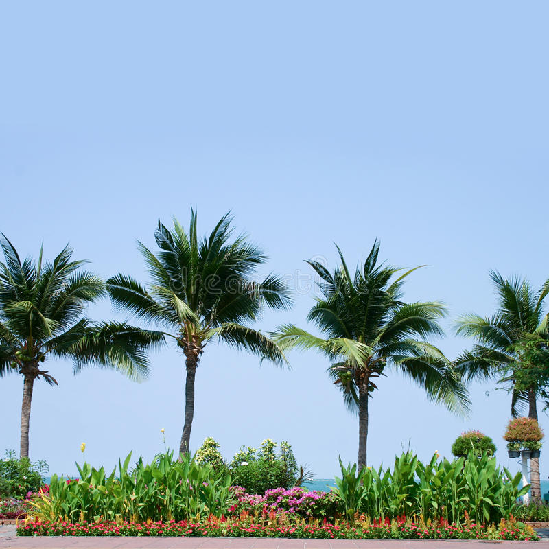 Download Palm Trees Royalty Free Stock Photos - Image: 13829218