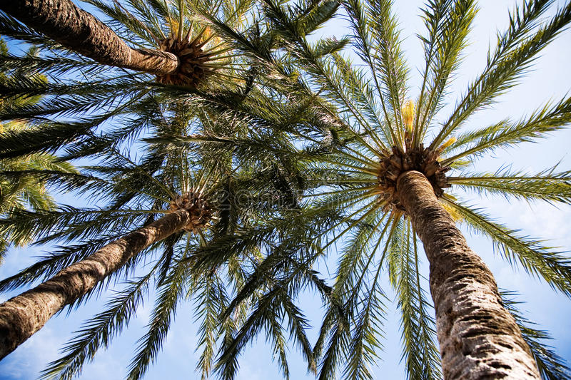 Download Palm trees stock photo. Image of landscape, green, bright - 14159070