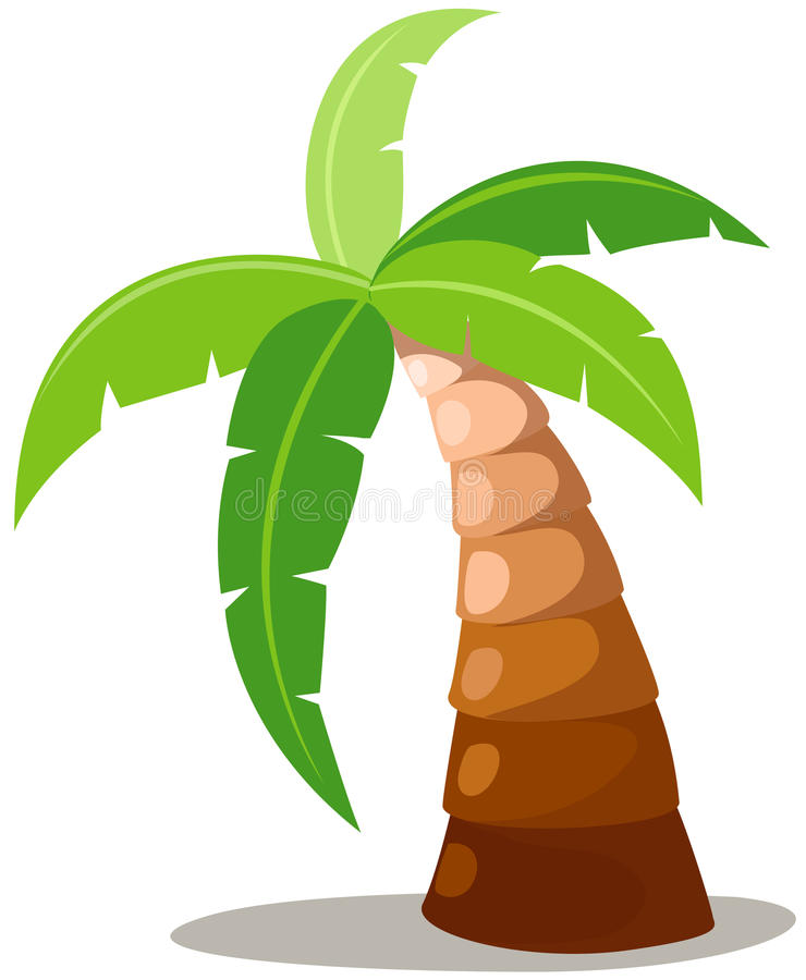 Palm trees. Illustration of isolated palm tree on white background vector illustration