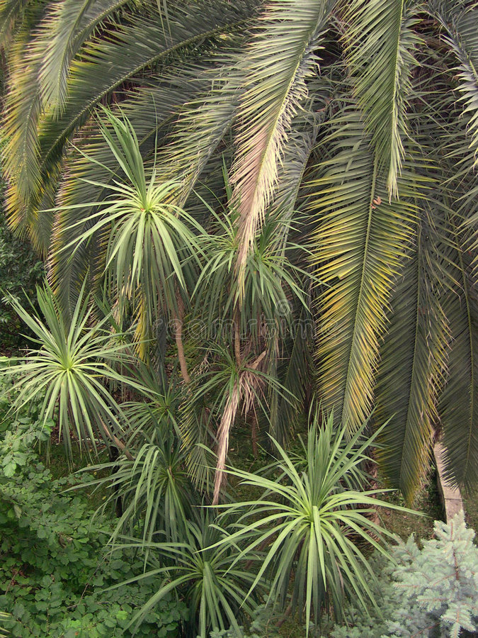 Download Palm trees stock photo. Image of palm, tropical, travel - 158994