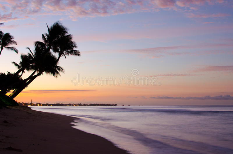 Palm trees. On coast of Maui Hawaii royalty free stock image