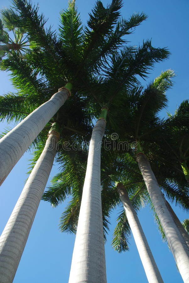 Download Palm trees stock photo. Image of islands, green, caribbean - 17796196