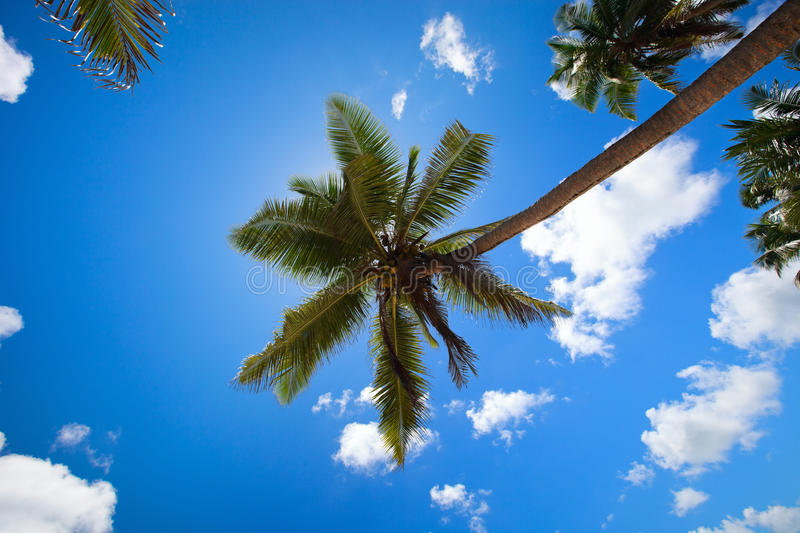 Download Palm Trees Royalty Free Stock Photography - Image: 17935757