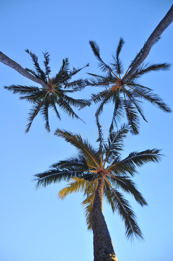 Download Palm Trees stock image. Image of beauty, beautiful, nature - 18935991