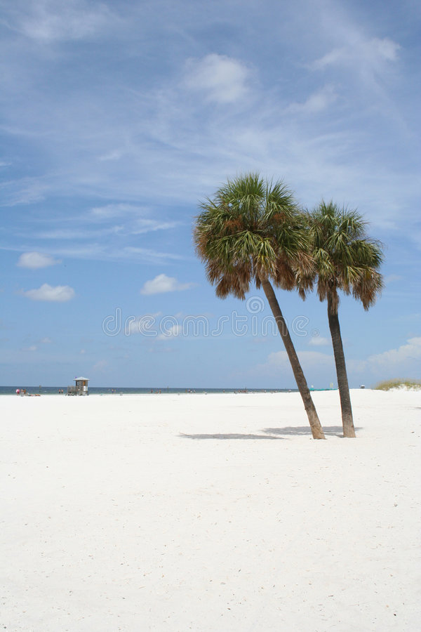 Download Palm Trees Royalty Free Stock Photo - Image: 189675