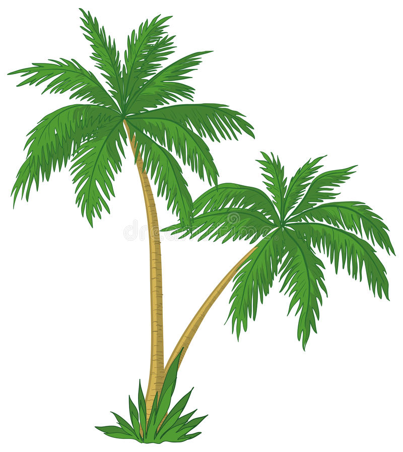Palm trees. With green leaves on white background vector illustration