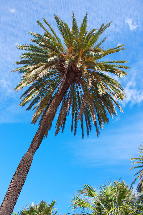 Free Palm Trees Royalty Free Stock Photos - 21348678