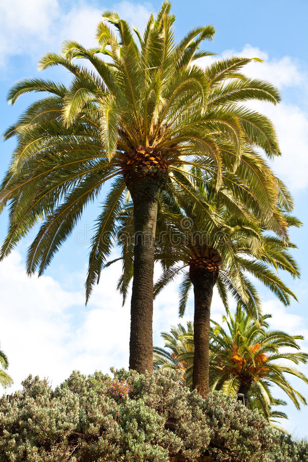 Download Palm trees stock image. Image of tropic, holiday, tropical - 22134461