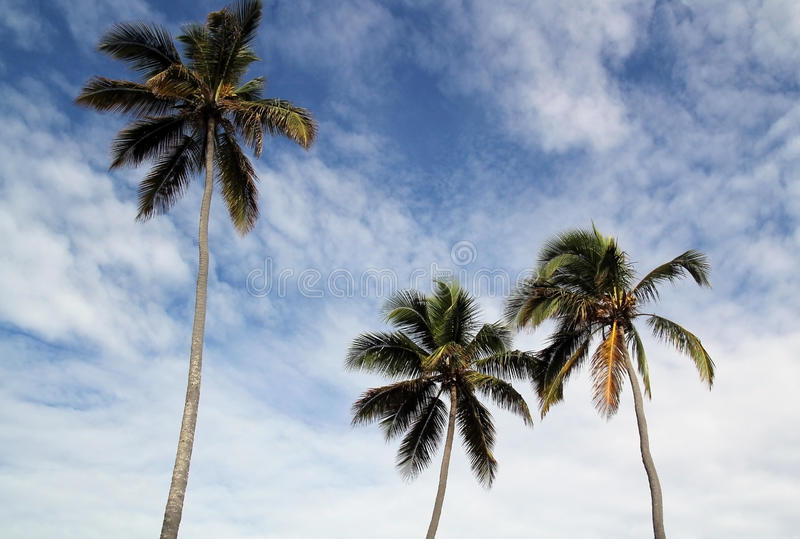 Download Palm Trees stock photo. Image of relax, palm, trees, tropical - 22866864