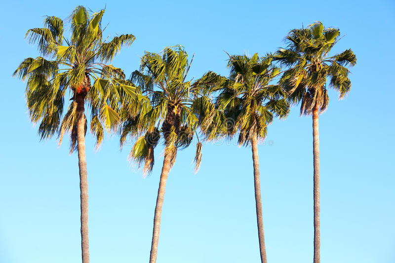 Download Palm Trees stock image. Image of tree, luxury, blue, vacation - 23751883
