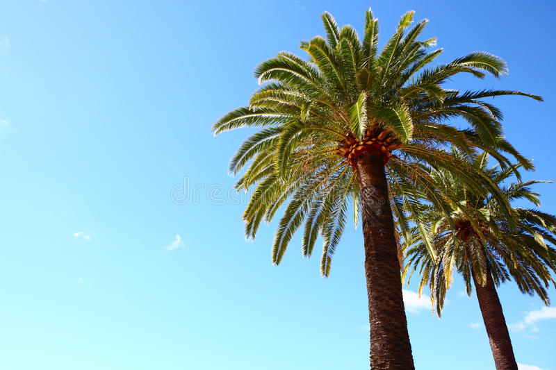 Download Palm trees stock image. Image of summer, sunlight, blue - 24353183