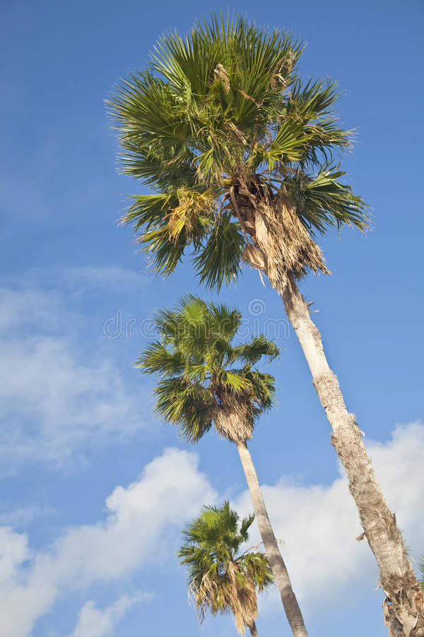 Download Palm Trees stock photo. Image of summer, palm, abstract - 25115802