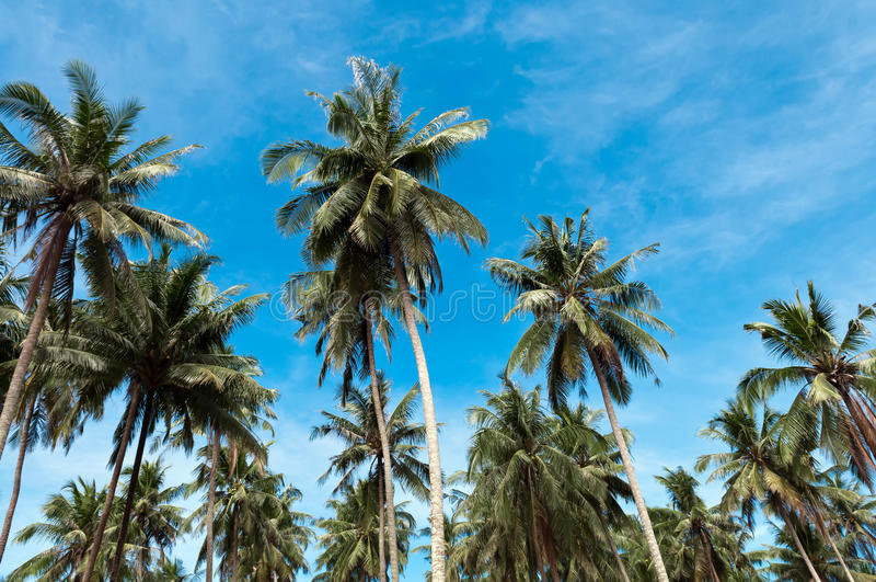 Download Palm trees stock photo. Image of scenery, travel, paradise - 26086426