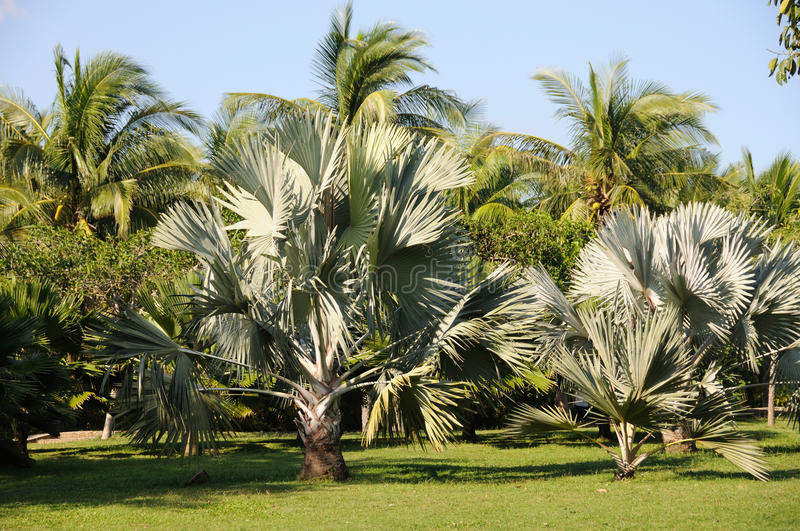 Download Palm trees stock photo. Image of fall, backgrounds, landscape - 26376266