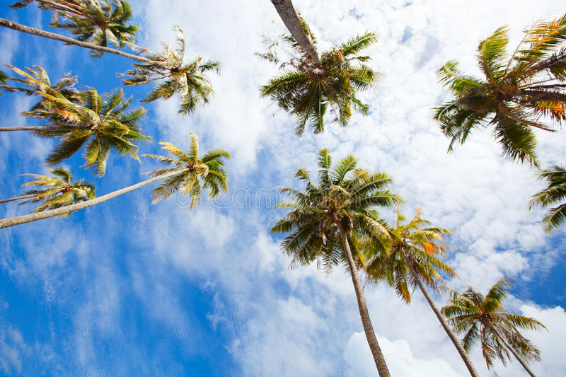 Download Palm trees stock photo. Image of nobody, beach, paradise - 26477584