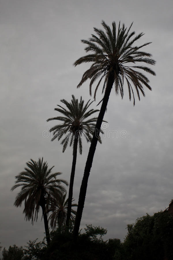 Download Palm trees stock photo. Image of relax, beauty, romance - 28157178