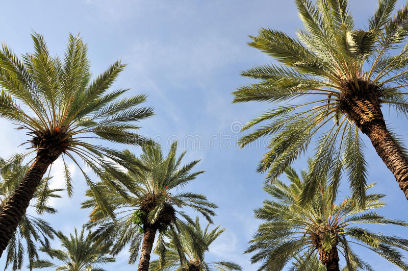 Download Palm Trees Royalty Free Stock Photo - Image: 28685635