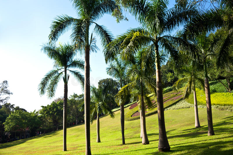 Download Palm trees stock photo. Image of grass, leaf, turf, woods - 28780756