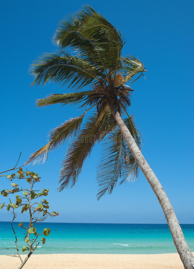 Download The Palm trees stock image. Image of nature, summer, water - 28986249