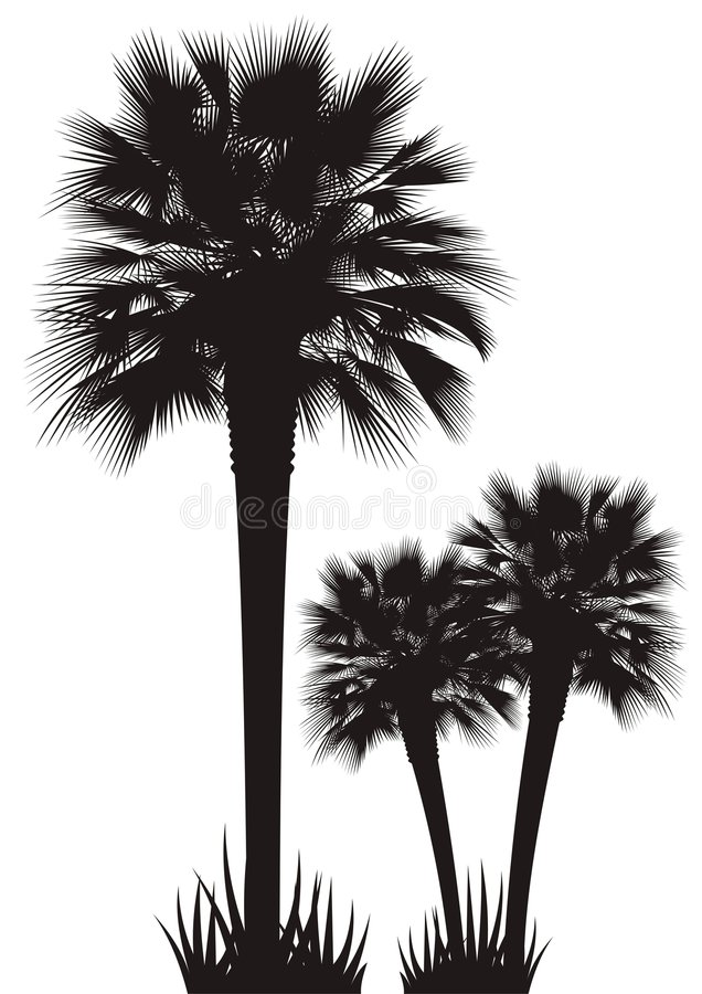 Palm Trees. Silhouettes of palm trees isolated on white stock illustration