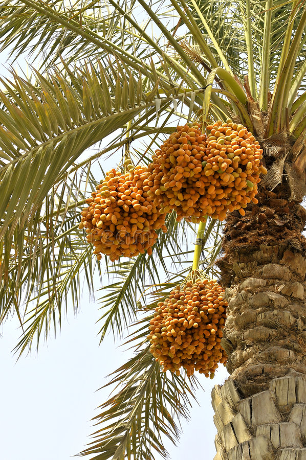 Free Palm Trees Stock Photo - 5813870