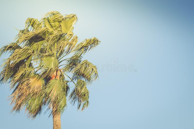 Palm trees against the background of blue sky, sunny day, beautiful nature stock photos