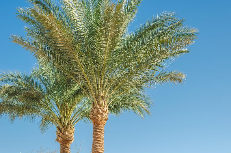 Palm trees against the background of blue sky, sunny day, beautiful nature stock photo