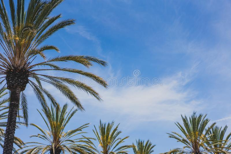 Palm trees against blue sky stock photography