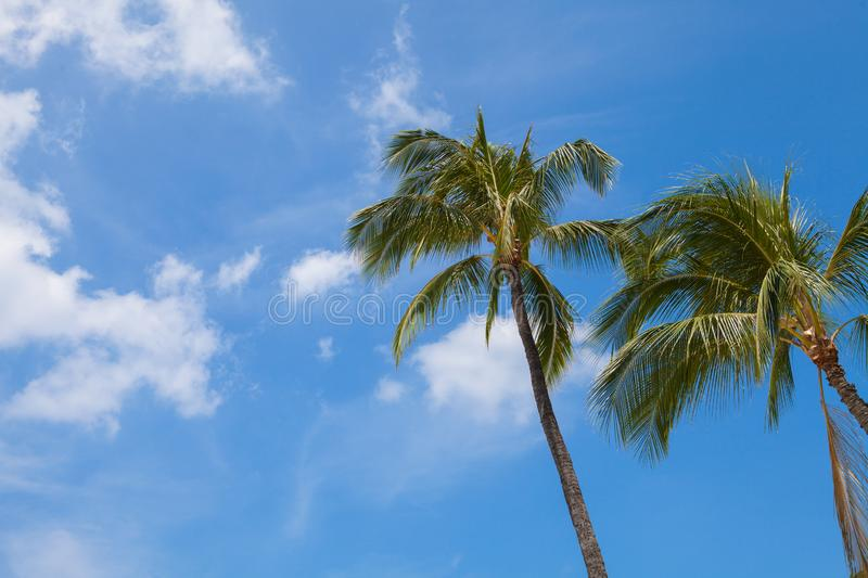 Palm trees against the blue sky in Hawaii. royalty free stock images