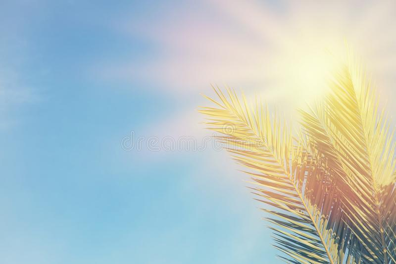 Palm trees against blue sky and sun rays. travel, summer, vacation and tropical beach concept. Palm trees against blue sky and sun rays. travel, summer royalty free stock photo