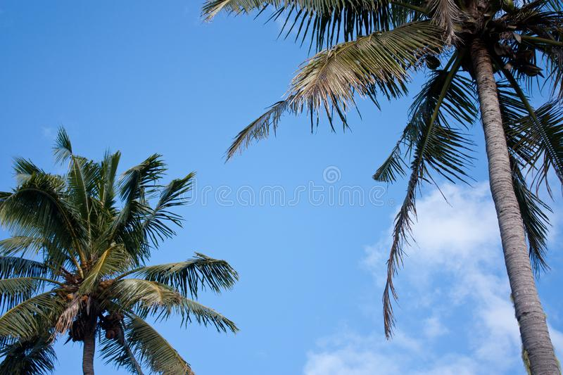 Palm trees against the sky in Tonga. Palm trees with leaves against the sky in Tonga stock photo