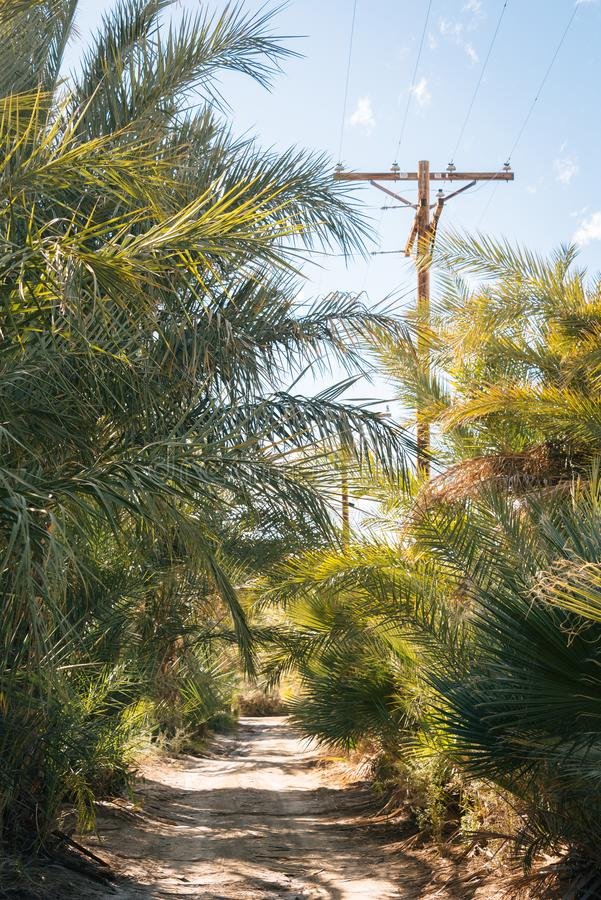 Palm trees along a dirt road in North Shore, along the Salton Sea in California stock photos