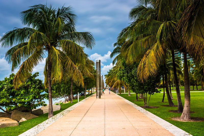Palm trees along a path at South Point Park, Miami, Beach. stock photos