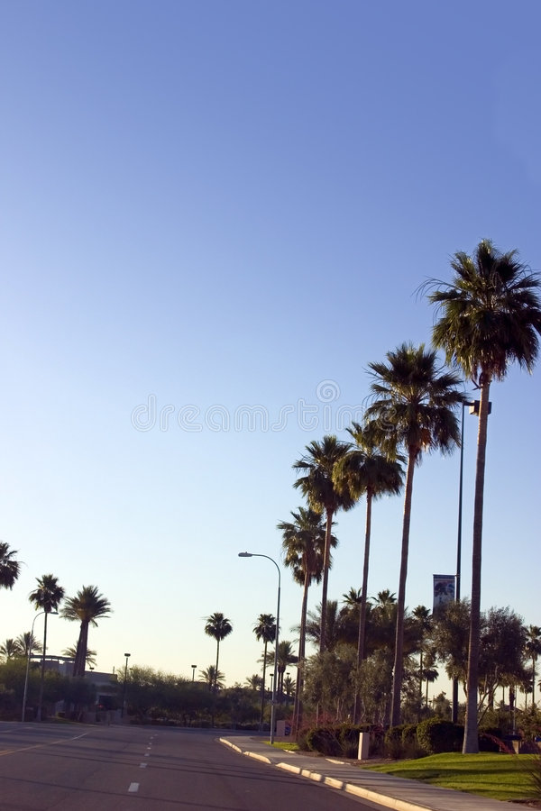 Palm Trees Along the Road of a Strip Mall stock photos