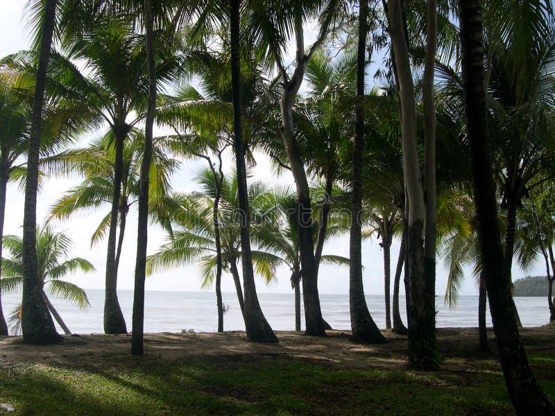 Palm trees, australia royalty free stock photo