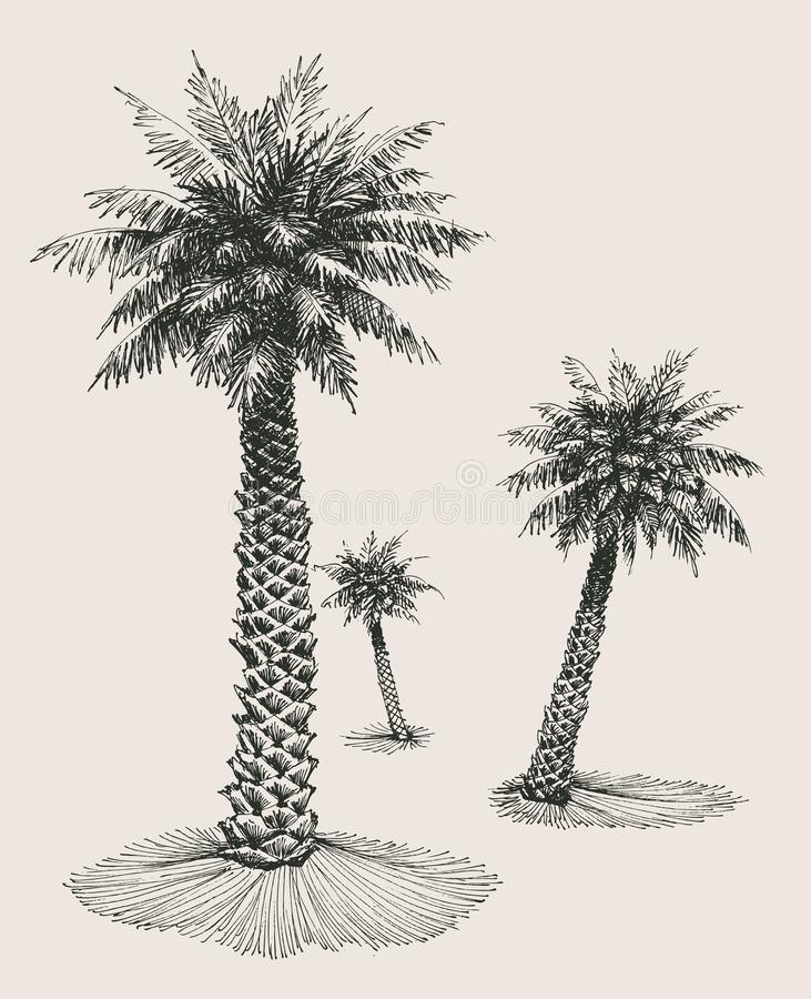 Palm trees background. Palm trees silhouettes background, hand drawn and separately grouped tree design elements royalty free illustration