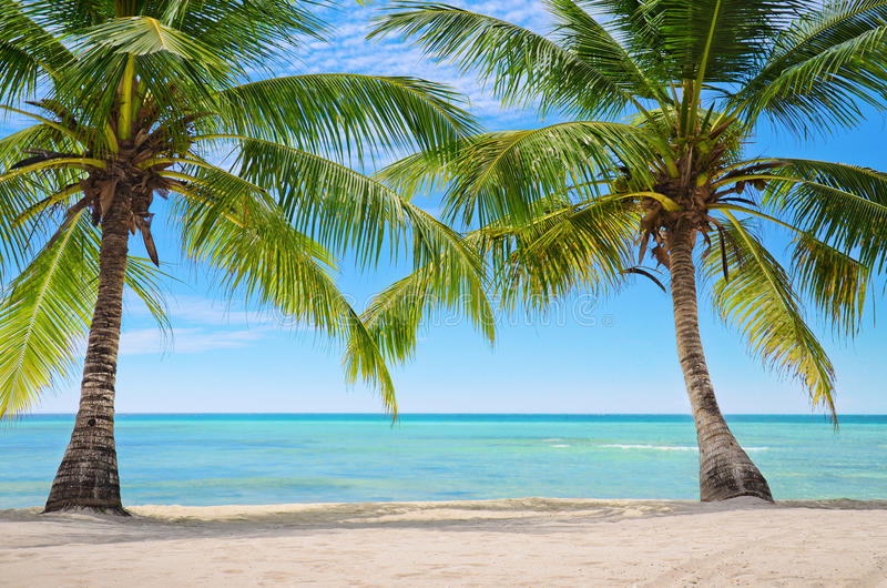Palm trees on the background of a beautiful carribean sea royalty free stock images