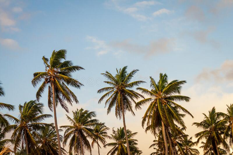 Palm Trees Background Free Public Domain Cc0 Image