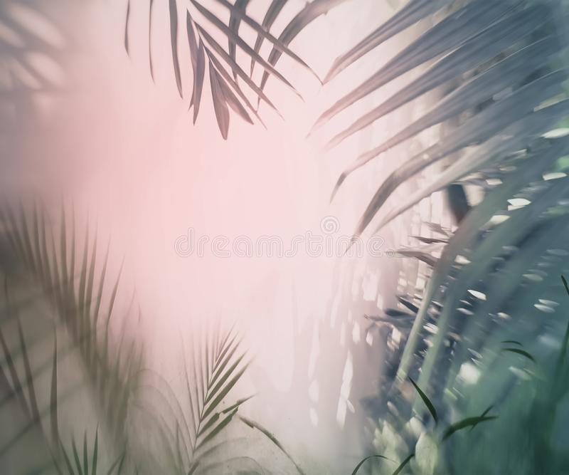 Palm trees background. Palm trees enclosing an area of piink sky stock photo