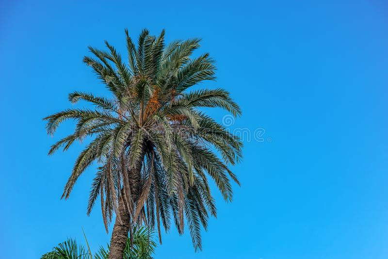 Palm trees on the background of the sky in the Montesa National Park. In Alexandria royalty free stock photography