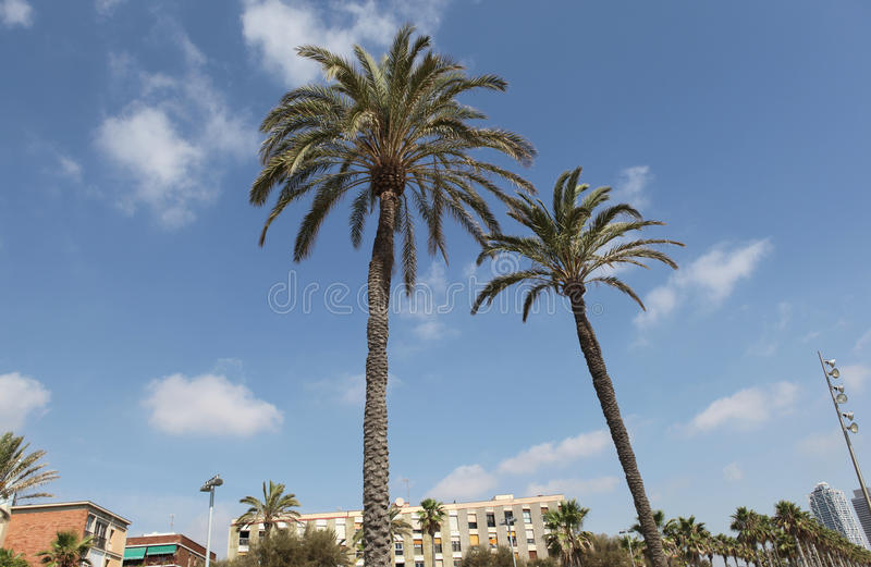 Download Palm trees barcelona stock image. Image of sunny, spain - 27022039