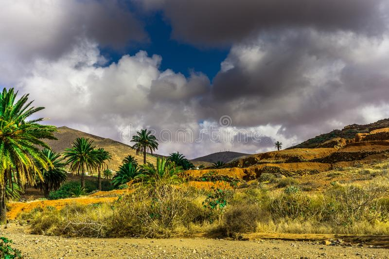 Palm trees in a barren landscape royalty free stock photography