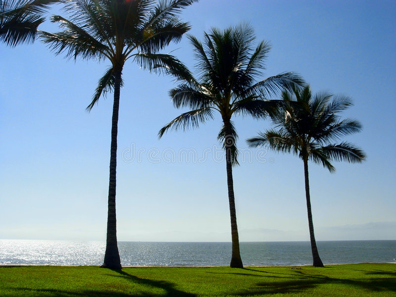 Palm trees at the beach royalty free stock photos