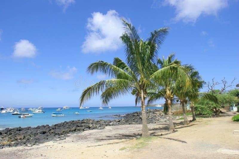 Palm Trees and Beach stock photos