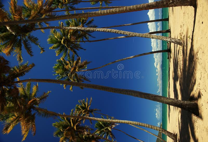 Download Palm trees on a beach stock image. Image of landscape - 19202241