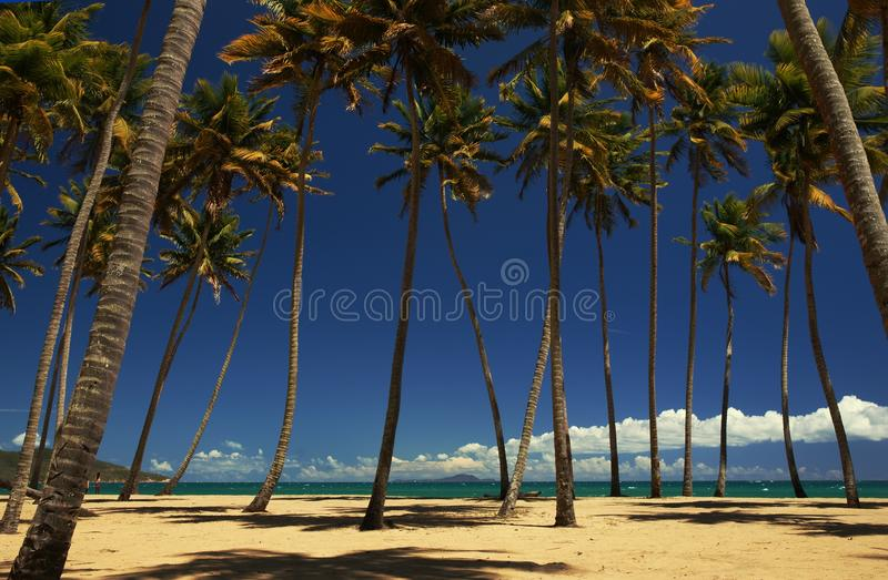 Download Palm trees on a beach stock image. Image of green, caribbean - 19202269