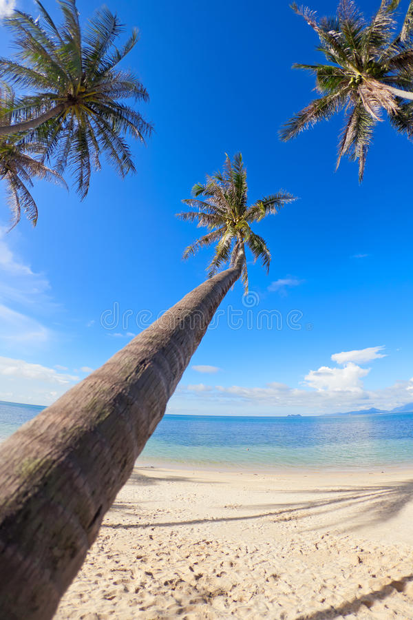 Download Palm trees on the beach stock photo. Image of season - 23057004