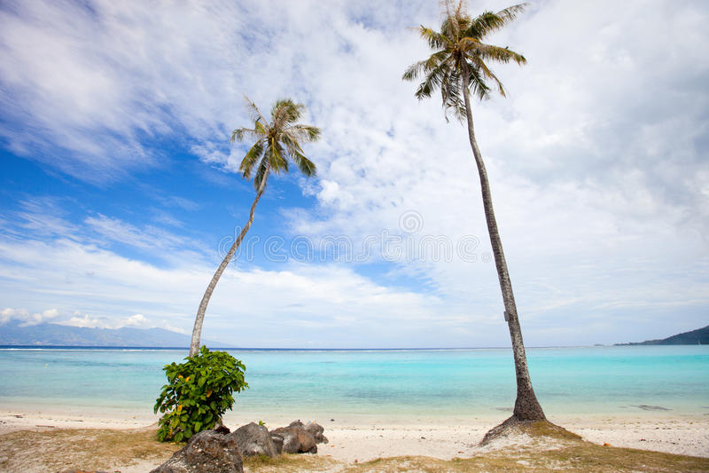 Palm Trees At Beach Stock Photo